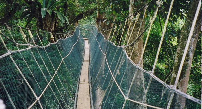 Canopy Walk - Photo 1