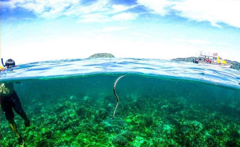Seatango-snorkeling-boat-sabah-kk.jpg