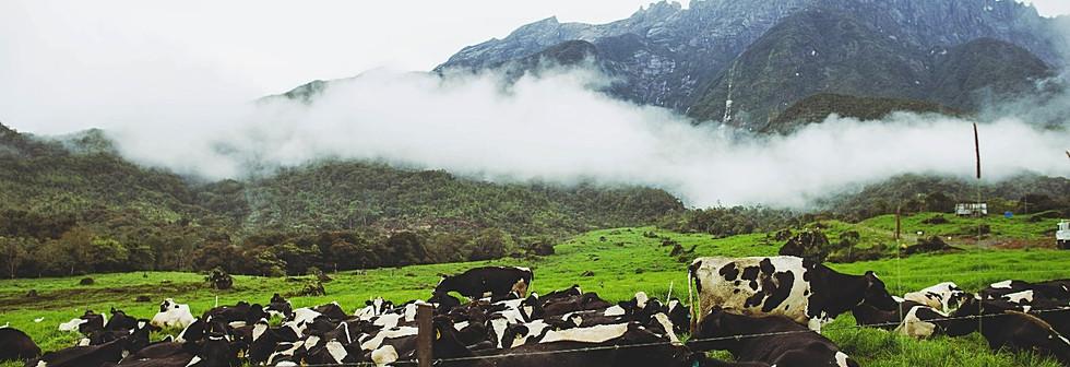 Desa Cattle Farm - Photo 2
