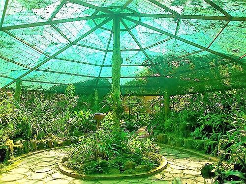 Kinabalu Park 02.jpg