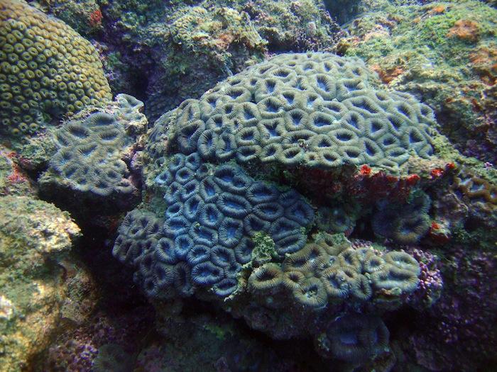 coralflor