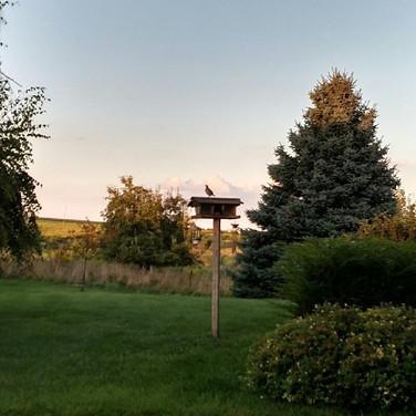 Minnesota Quail Forever