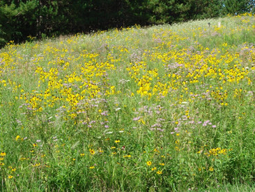 Minnesota Quail Forever, Ideal Habitat, Grasslands