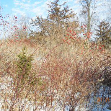 Minnesota Quail Forever, Good Habitat