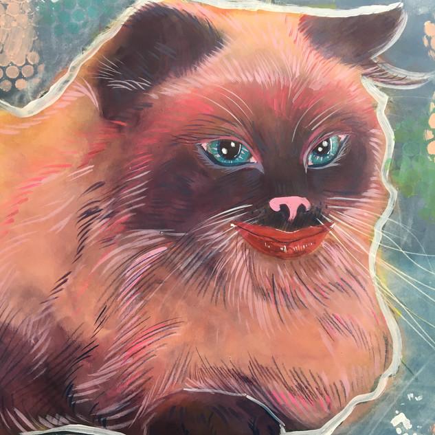 himalayin cat cheshire cat alice in wonderland