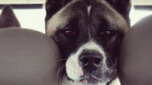 De perros, rumores y otros amores.
