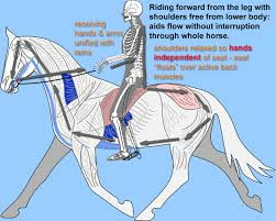 proper riding seat diagram.jpg