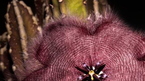La flor tramposa