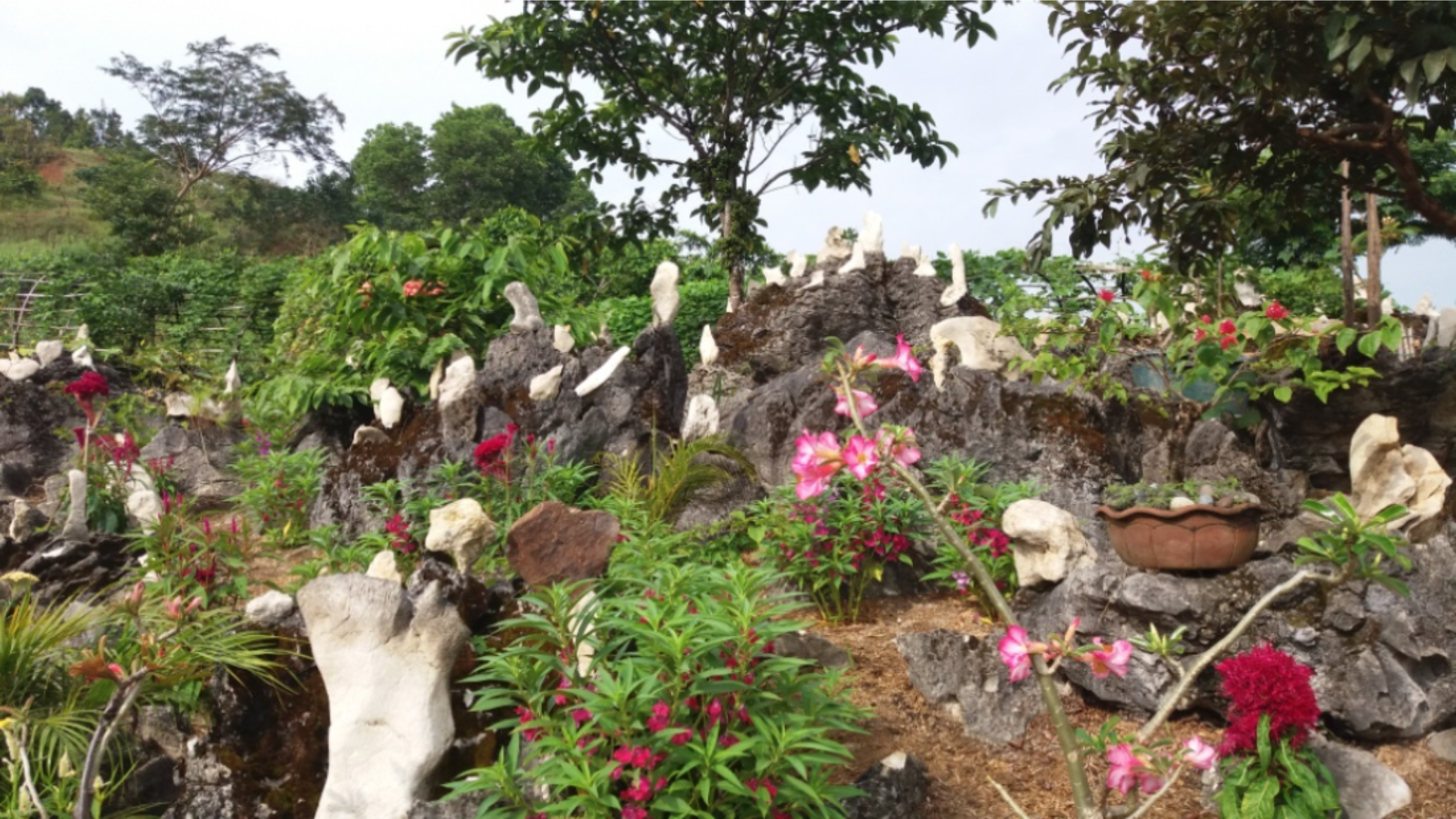 Rocks and flowers in the Prayer Garden