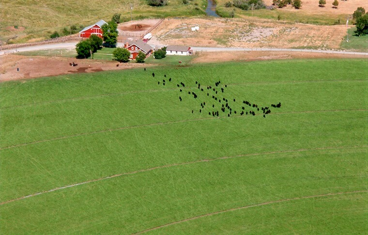 Livestock Survey