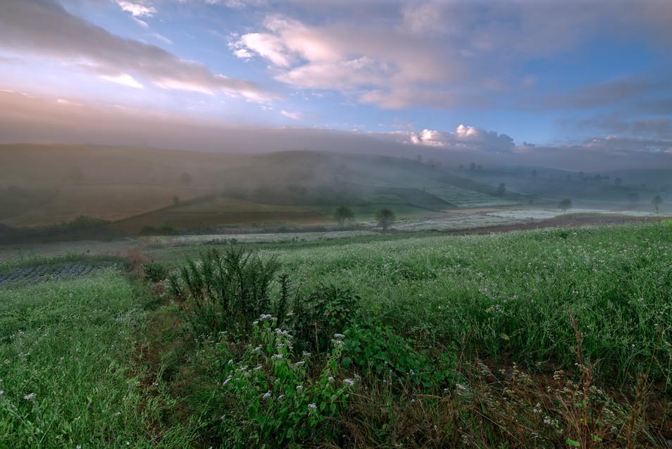 Mist over the farm