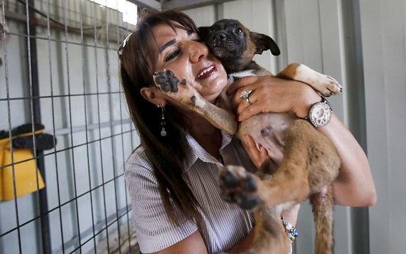 Diana Babish, Bethlehem Animal Shleter