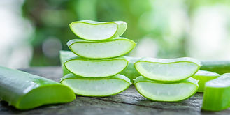 fresh-aloe-vera-leaves-slice-and-aloe-ve