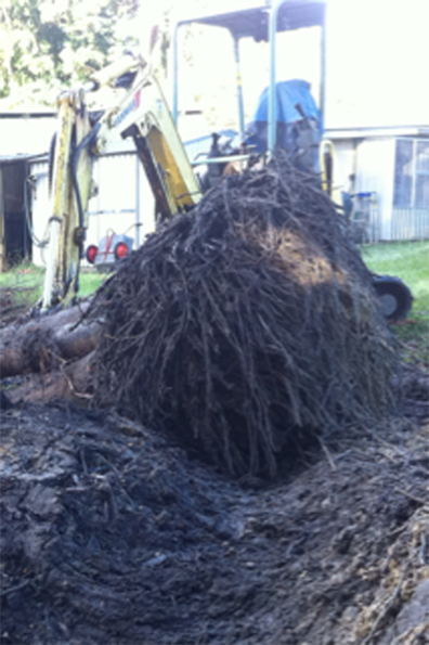 Tree root removal