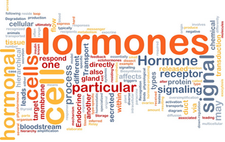Hormone Study Update