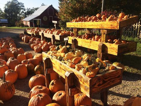 pumpkins2.jpg