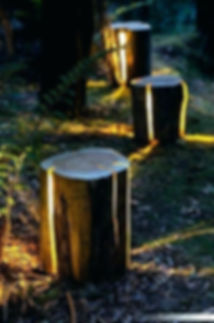 lights in stumps.jpg
