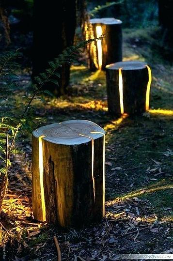 lights in stumps.jpg