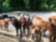 Dog Boarding Chattanooga