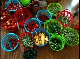 basket of veggies from farm.jpg