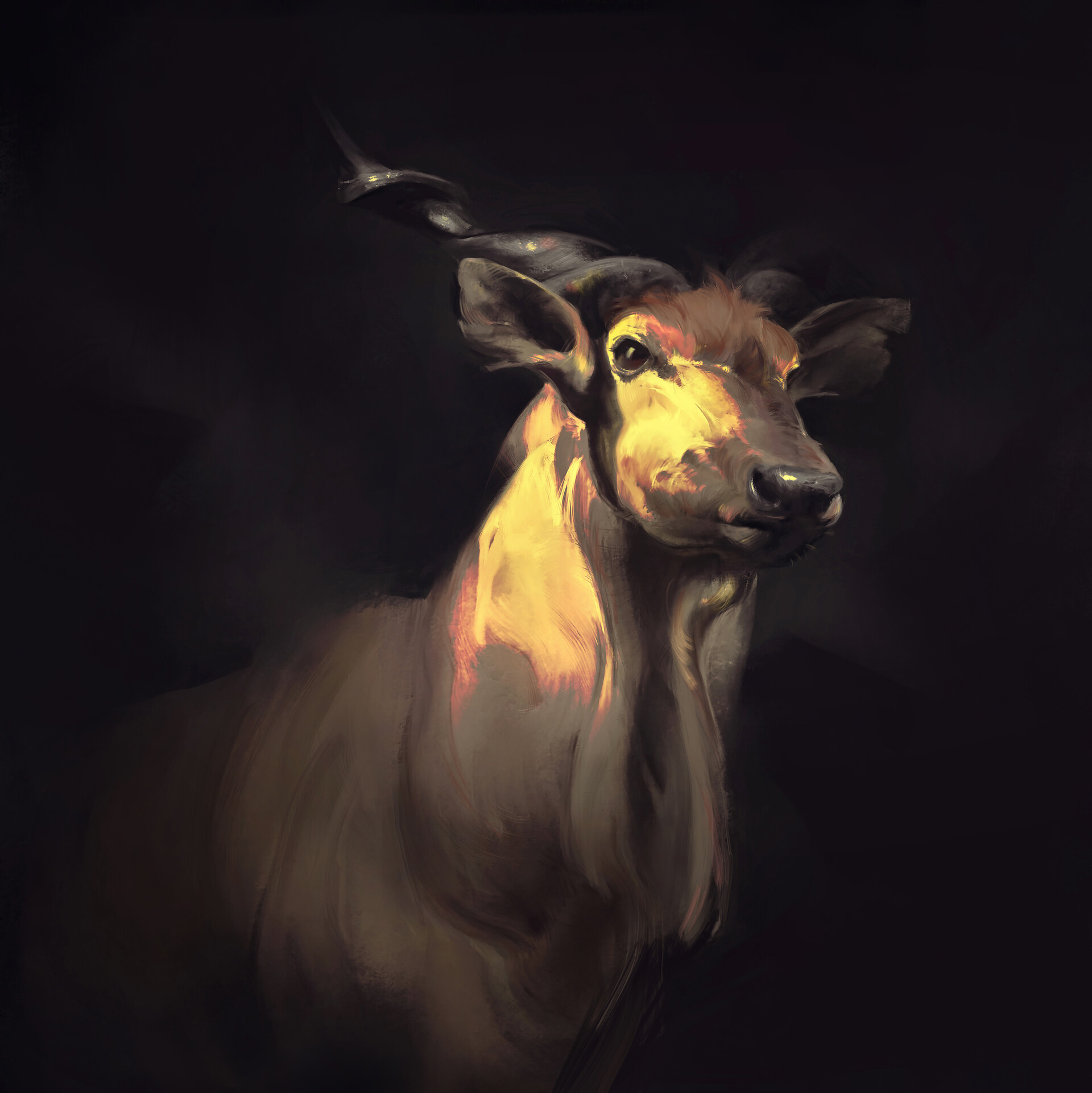 arash-razavi-deer-friend
