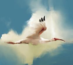 arash-razavi-birdy3a