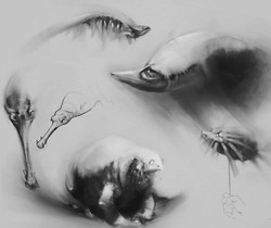arash-razavi-aquarium-final-final