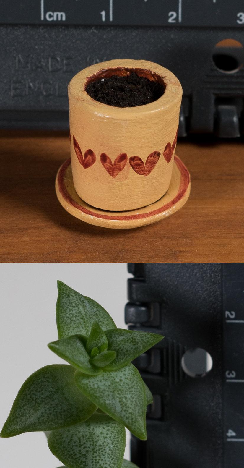 plant+pot.jpg