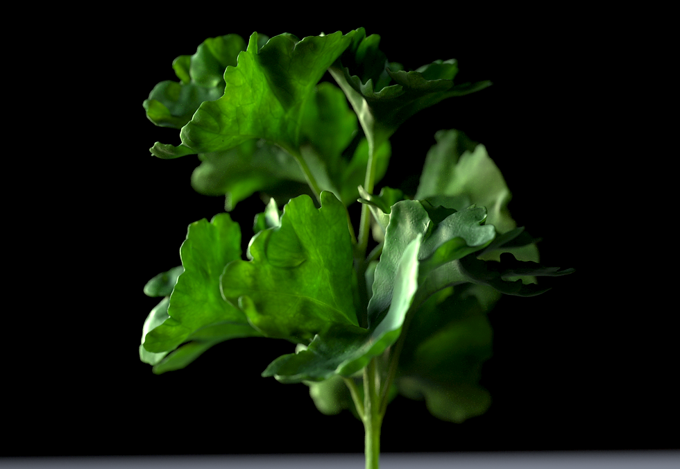 parsley2.png