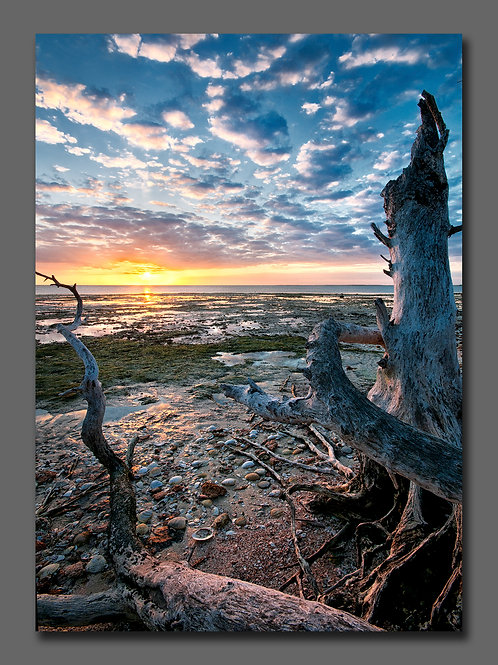 20x30 image  matted to finished size of 30x40-Framed