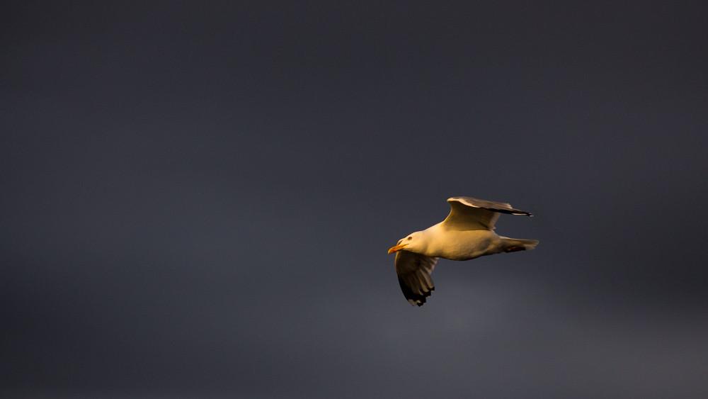 Baltic-light-Santiago-Pampliega-kerrispenphoto-gaviota-1