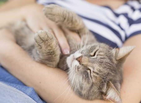 É fã de felinos? Celebre hoje o Dia Internacional dos Gatos