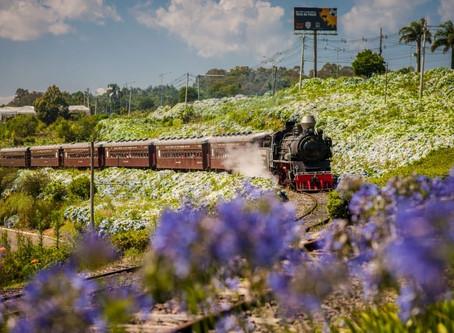 Viagens de trem no Brasil reúnem paisagens, música ao vivo e até degustação de vinho