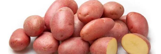 "Картопля ""Біла Роса"""