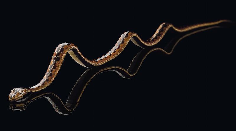 Serpenti-Cover