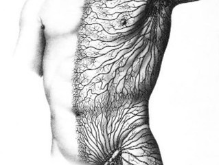 Hello Lymphatic System!