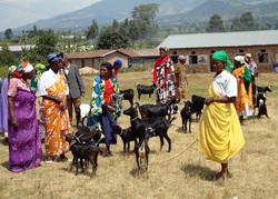 Women with donated goats
