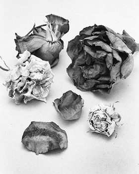 Assortment of dried rose pieces, 2015.