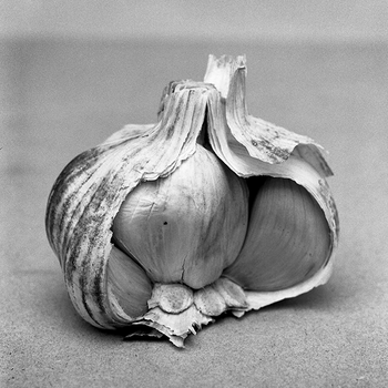 Head of garlic, 2014.