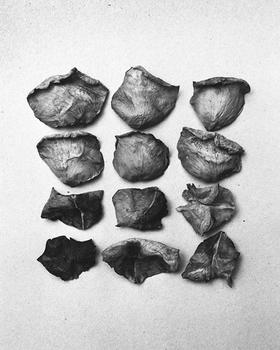 12 dried rose petals, 2015.
