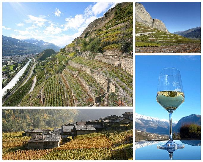 Expérience autour de la vigne et du vin. Œnotourisme en Valais, dégustation de vin chez un vigneron local