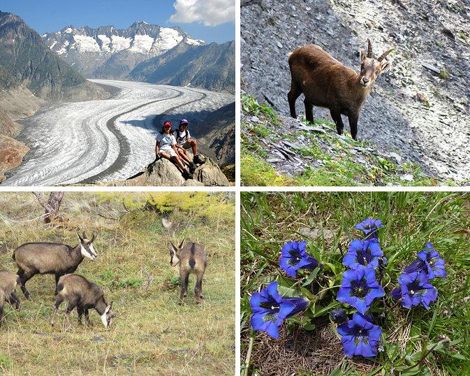 Balade à la découverte de la Faune et de la fore du Valais