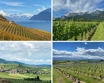 discover the lavaux vineyards with Swiss Wine Tours
