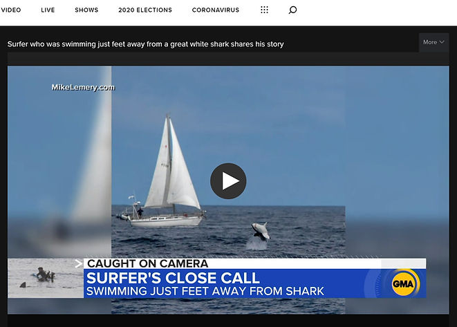 GMA Shark.jpg