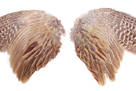 Pheasant Wings