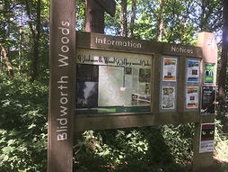 blidworth woods 3.jpg