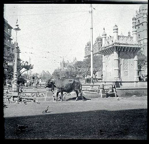 Kothari-Pyaav_-Mumbai-Pyaav-project.jpg