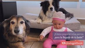 ¿Cómo preparar a tus perros para la llegada de tu bebé?