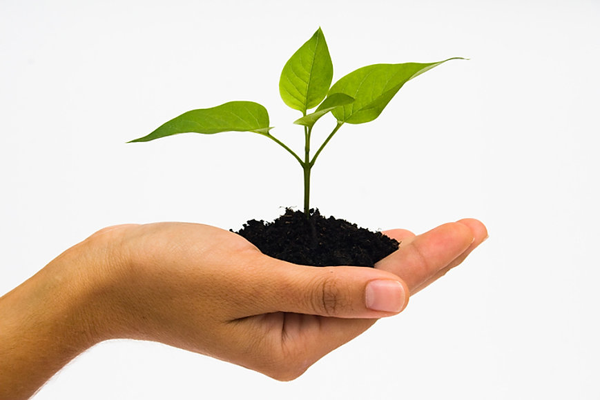 organic leaves. growing plant life. plant in hand. sowing plant