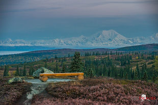 The view from Blueberry Hill of Denali and the Alaska mountain range is probably the most photographed spot from Caribou Lodge Alaska.